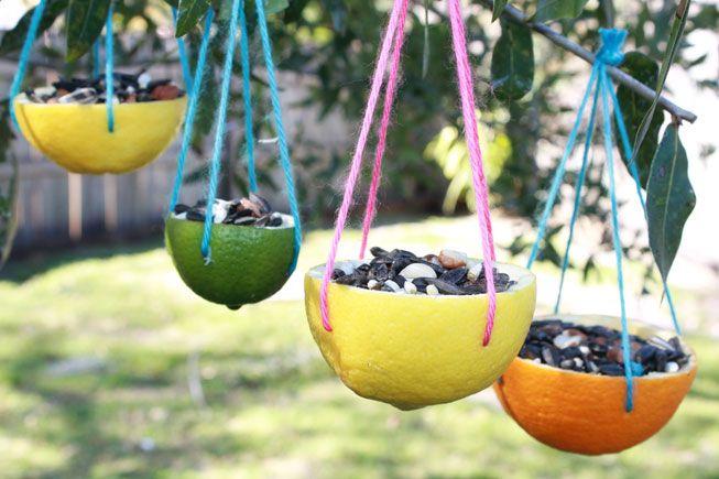 CirtrusRindBirdfeedersHangingFromTrees.jpg.653x0_q80_crop-smart